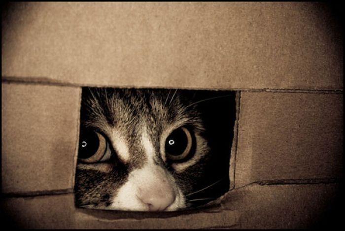 hiding-cat
