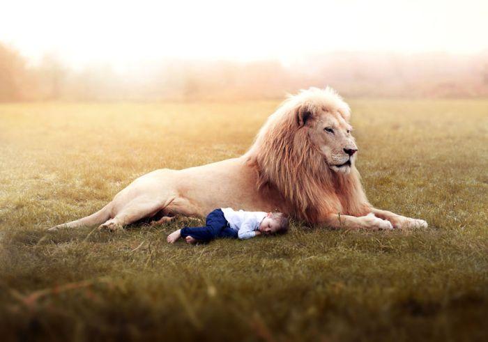 Lion Innocence