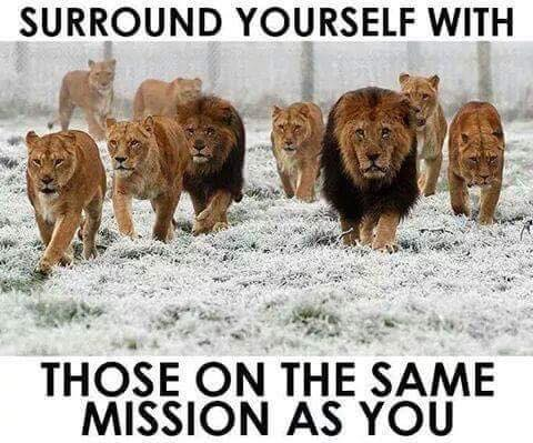 Lions Surround Yourself
